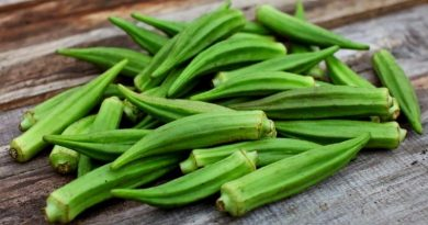 okra for diabetes